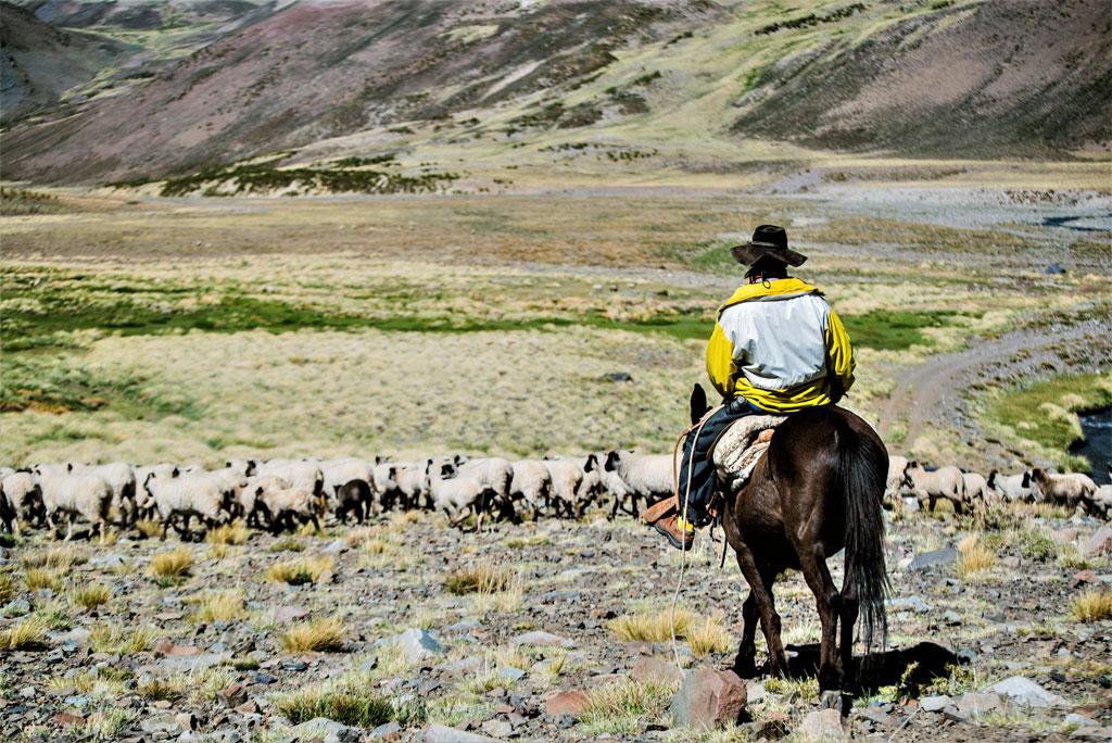 Un Gaucho, le cow-boy argentin, profitant de l'immensité de la Patagonie pour faire paître son cheptel.